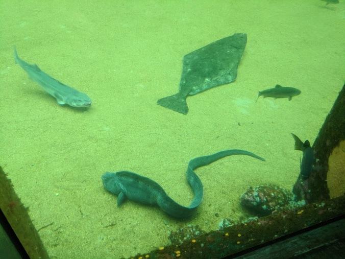 fish lying down