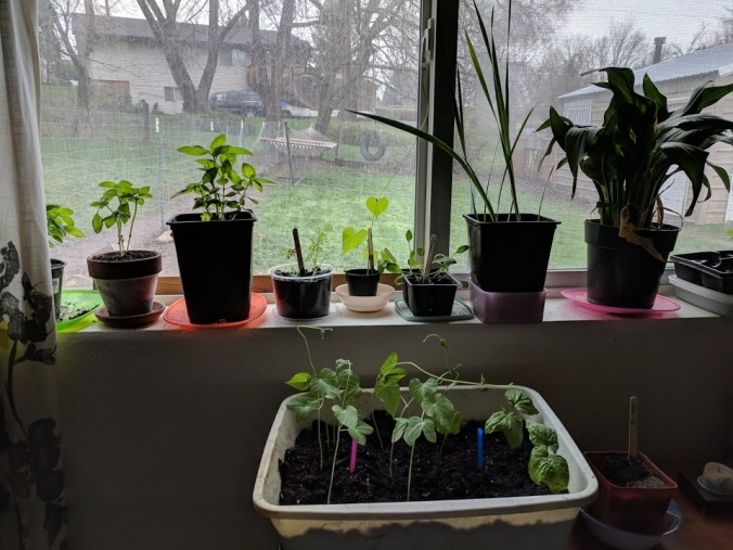 plants growing!